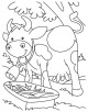 Cows Coloring Page