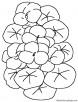 Nasturtium flowers coloring page