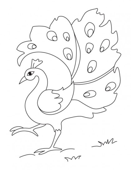 A dancing peacock coloring page download free a dancing for Peacock coloring pages for kids