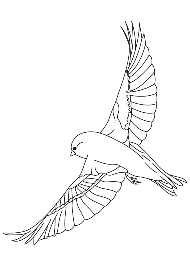 Finches flying coloring page Download Free Finches flying