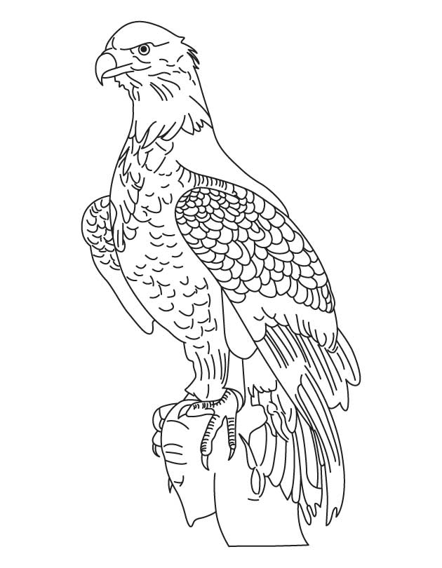 national bird bald eagle coloring page - Bald Eagle Coloring Page