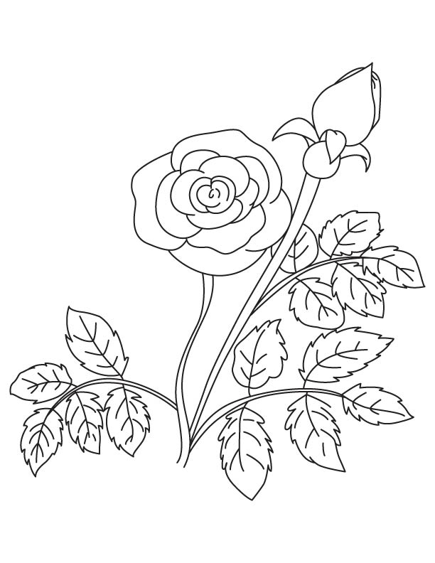 Rose with bud coloring page Download Free Rose with bud