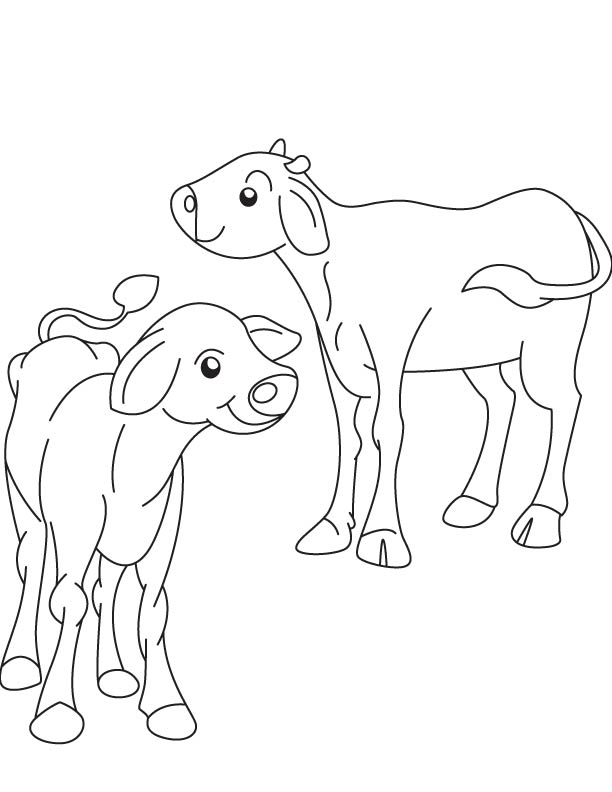 Two ox calf coloring page