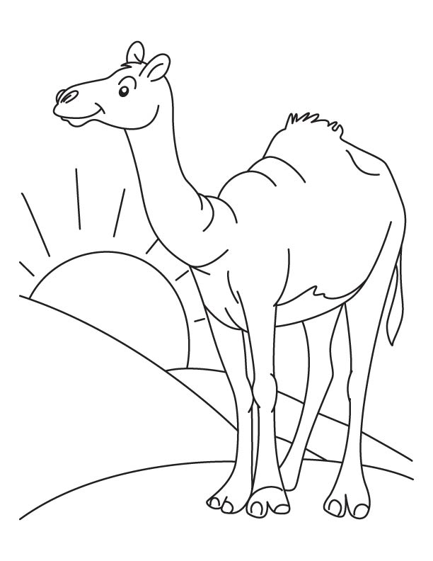 Camel picture to color coloring page