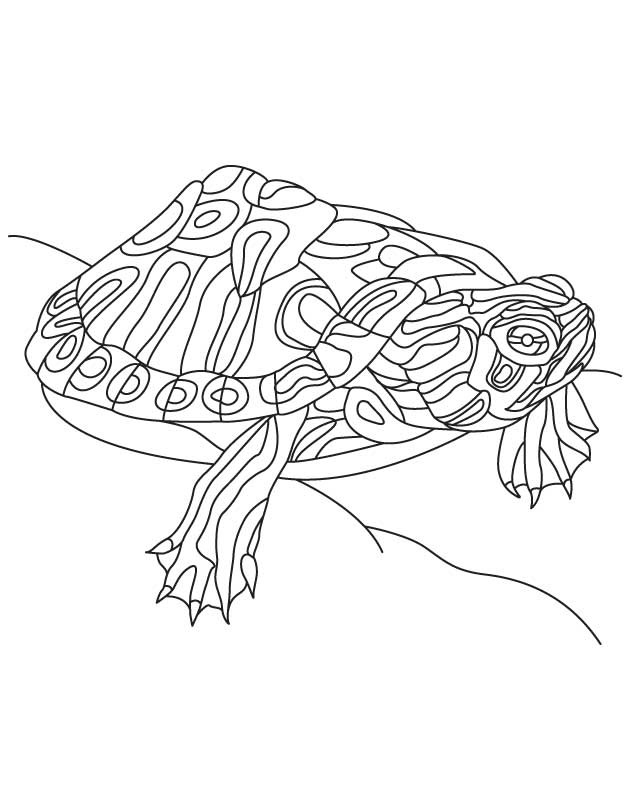 Alabama Red Bellied Turtle Download Free Alabama Red