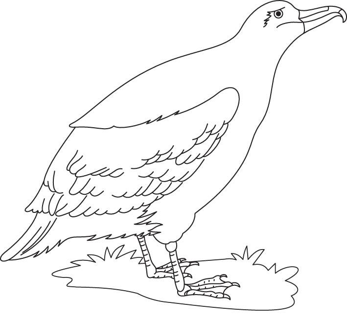 A cute albatross bird coloring page