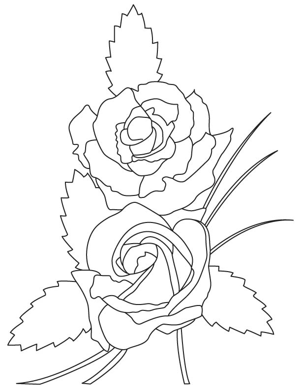 Parts Of A Rose Plant Coloring Pages