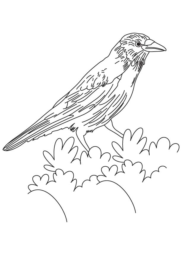 American crow coloring page