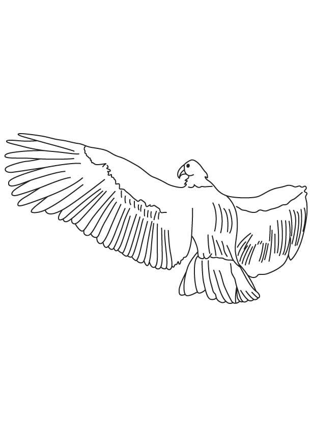 An andean condor soars coloring page