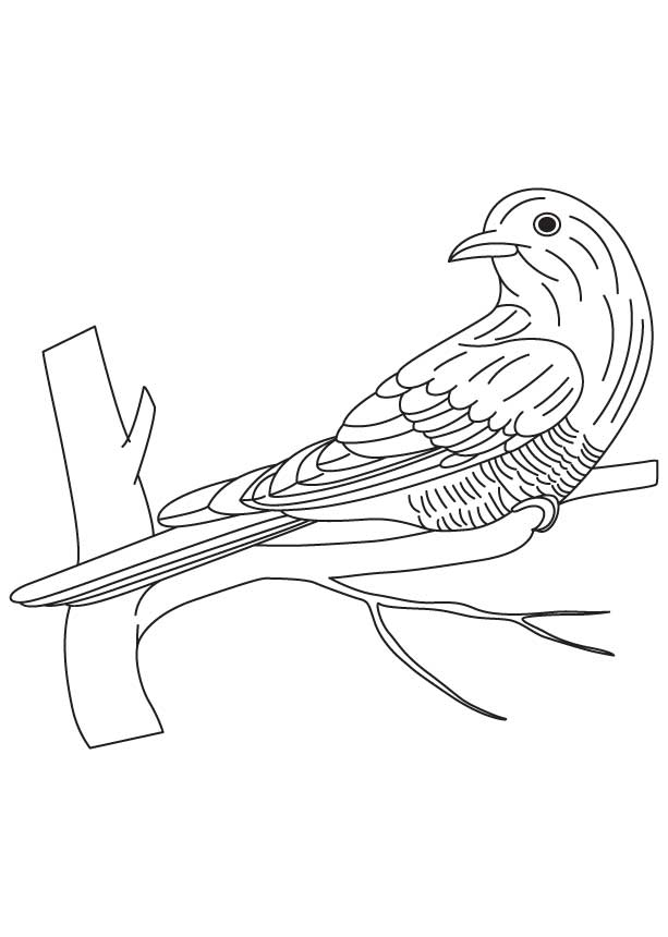 Asian emerald cuckoo coloring page