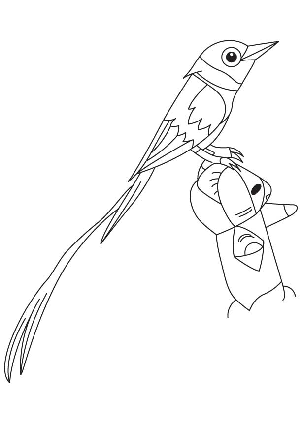 Asian paradise flycatcher coloring page