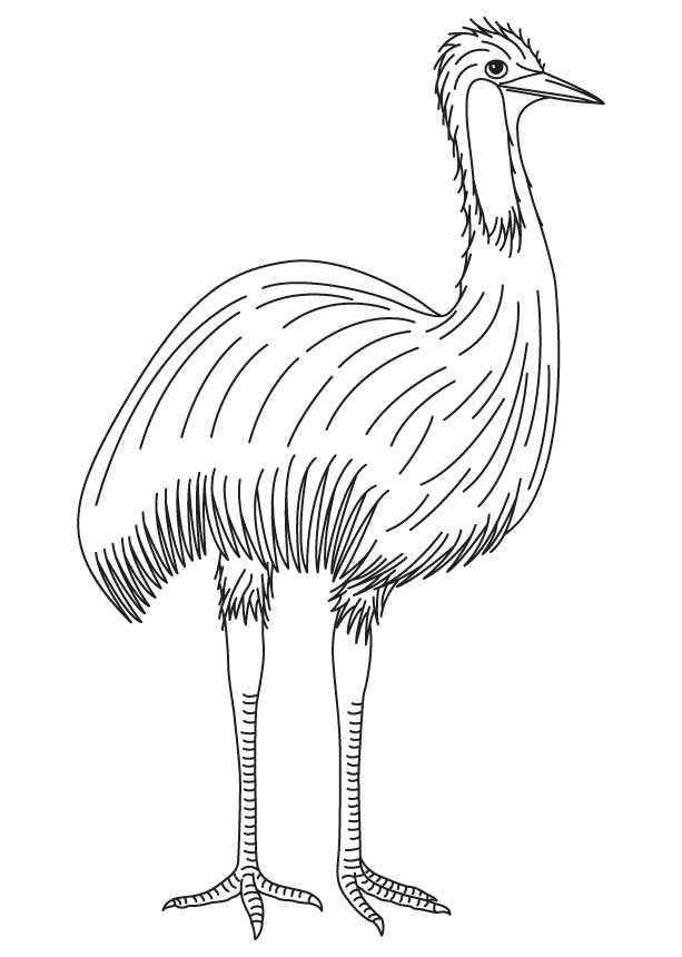 moreover  as well  in addition  moreover  additionally rt pc together with  besides  as well tokyo mew mew desktop by pharaohatemuslioness besides  in addition . on free printable emus coloring pages