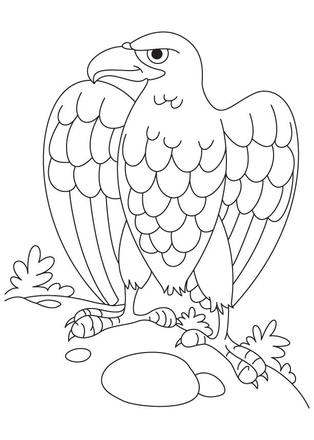 bald eagle coloring page - Bald Eagle Coloring Page