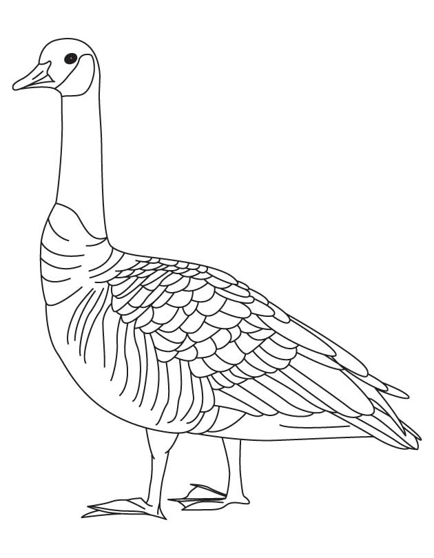 barren goose coloring page