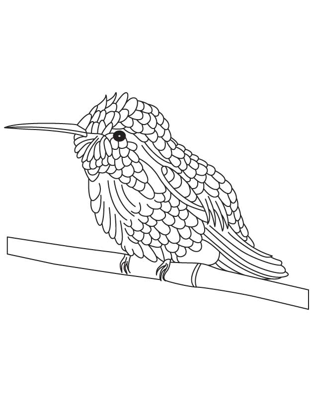 Black chinned hummingbird coloring page Download Free Black