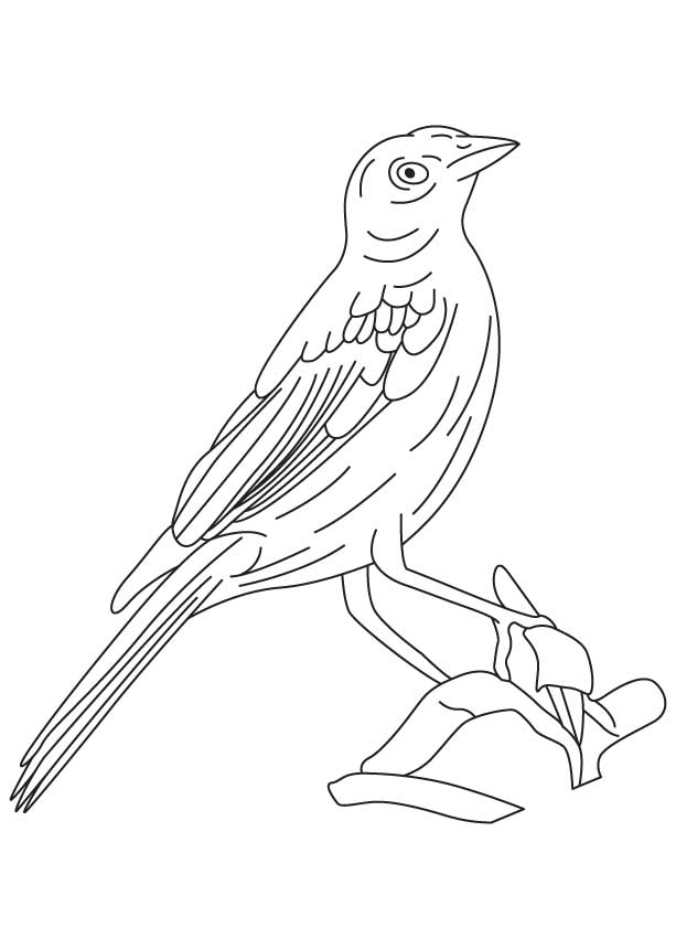 Bronzed cowbird coloring page