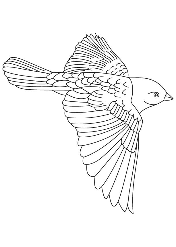 Brown headed cowbird coloring page