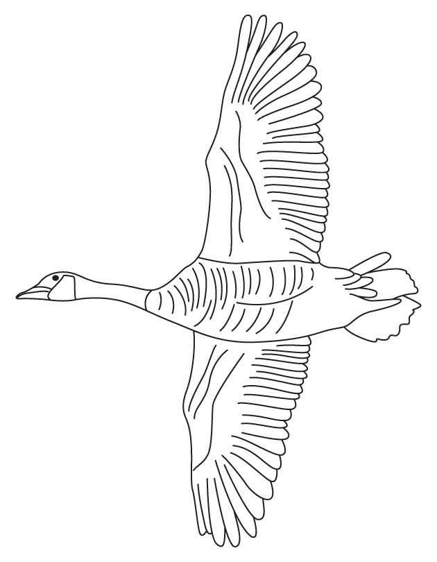 Canadian goose outline - photo#28