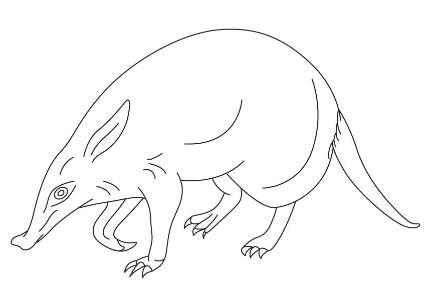 Cape anteater coloring page