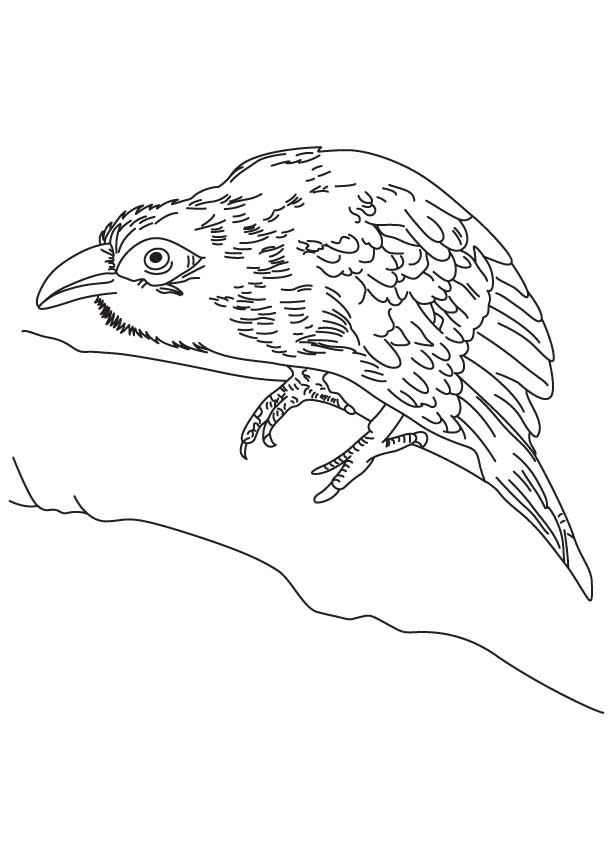 Chestnut Breasted Malkoha Coloring Page