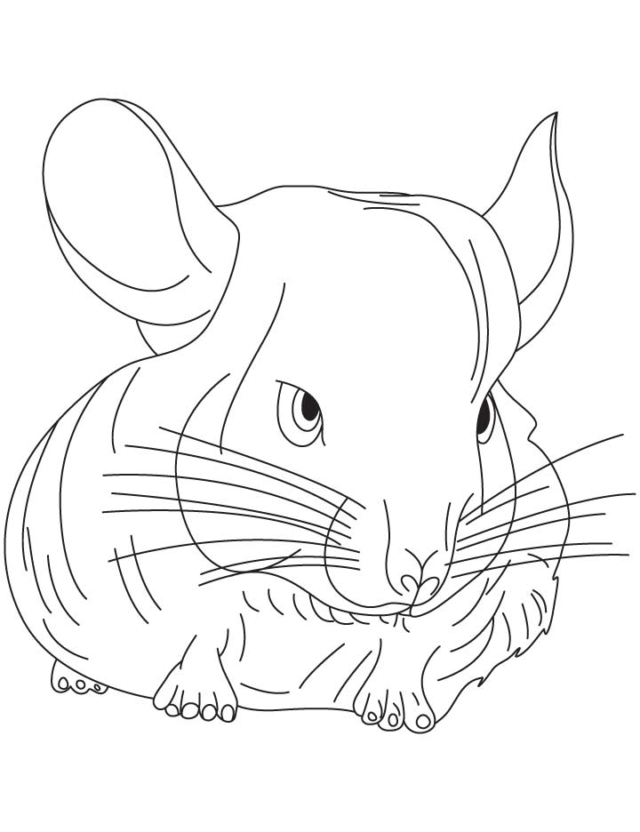 Small chinchilla coloring pages Download Free Small chinchilla