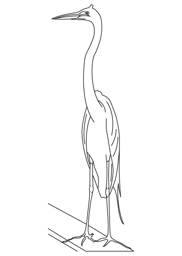 Chinese egret coloring page