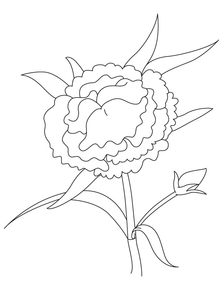 Colombian flower coloring page