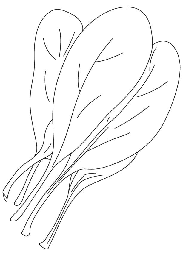 Common spinach coloring page : Download Free Common ...