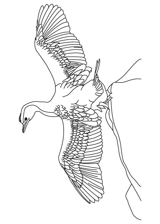 cormorant ready to fly coloring page