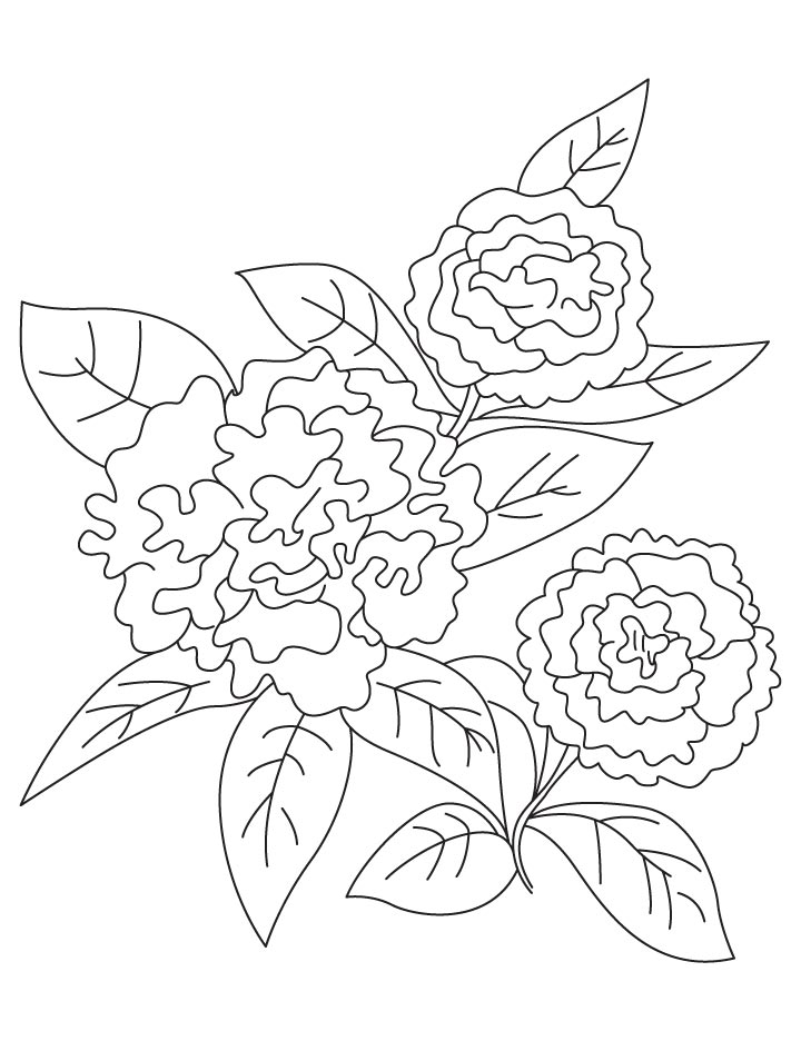 Dianthus caryophyllus coloring page