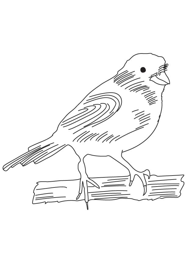 Domestic canary coloring page