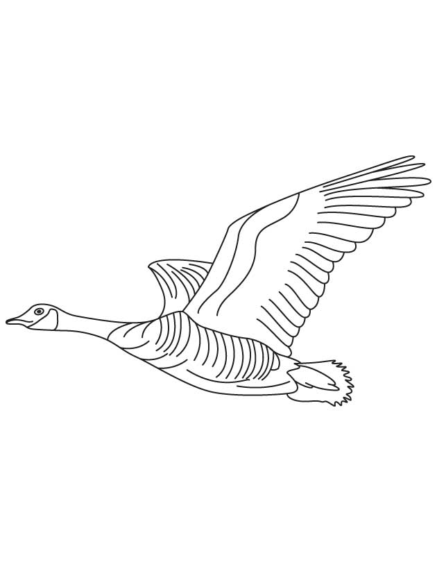 geese flying south coloring pages - photo#4