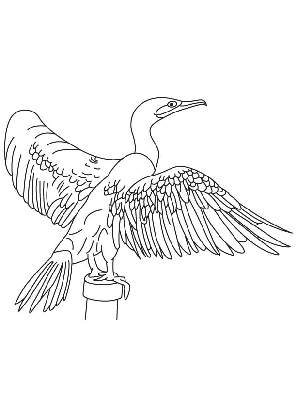 double crested cormorant coloring page