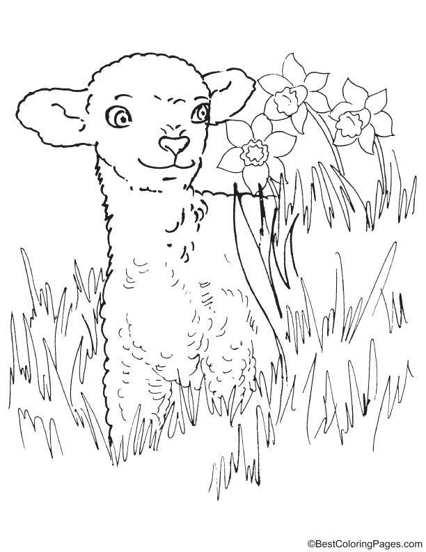 Easter lamb coloring page