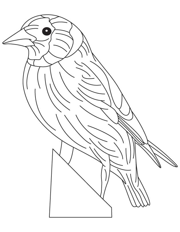 coloring pages goldfinch - photo#12