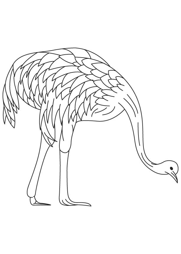 Farmed emu coloring page Download