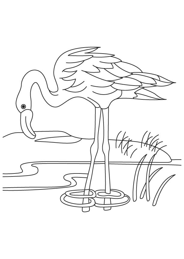 Flamingo in a pond coloring page | Download Free Flamingo in a ...