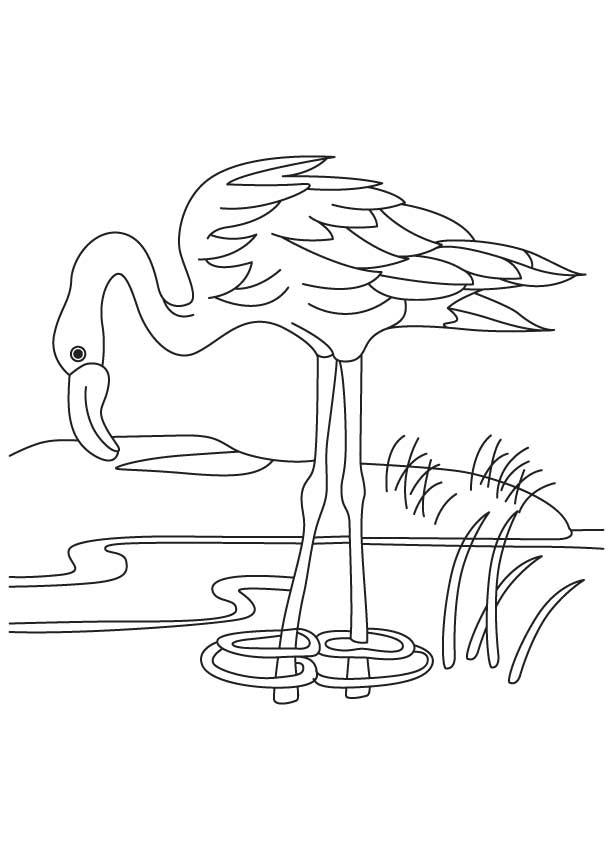 Pond Life Coloring Page Worksheets | 99Worksheets | 860x613