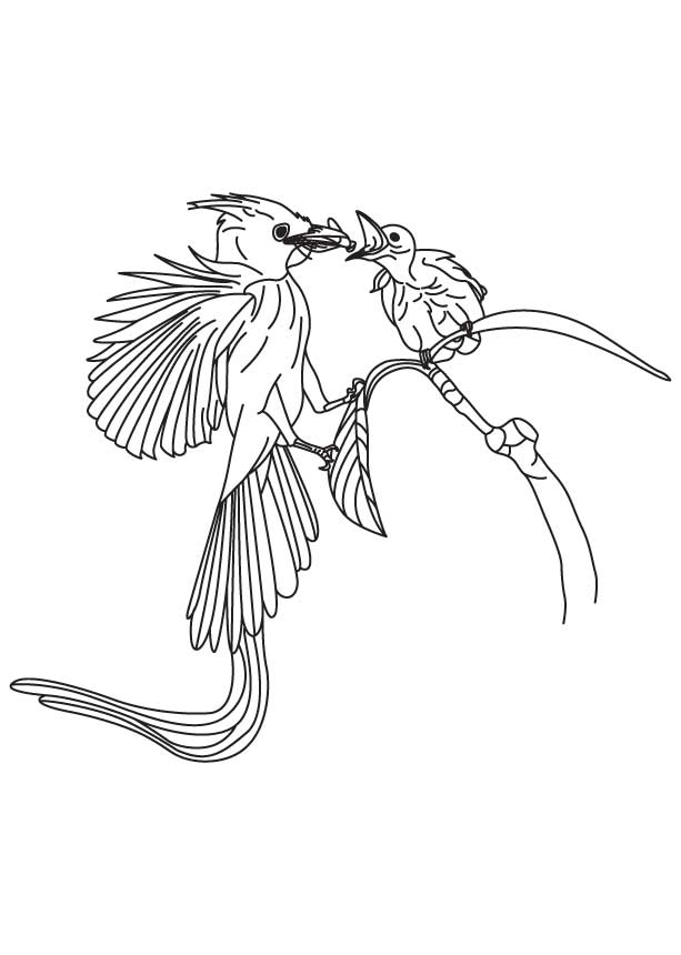 Flycatcher feeding its baby coloring page