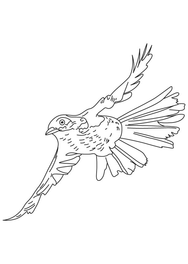 Flying Brown Thrasher Coloring Page