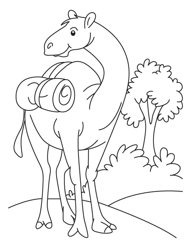 Funny camel standing in the field coloring page