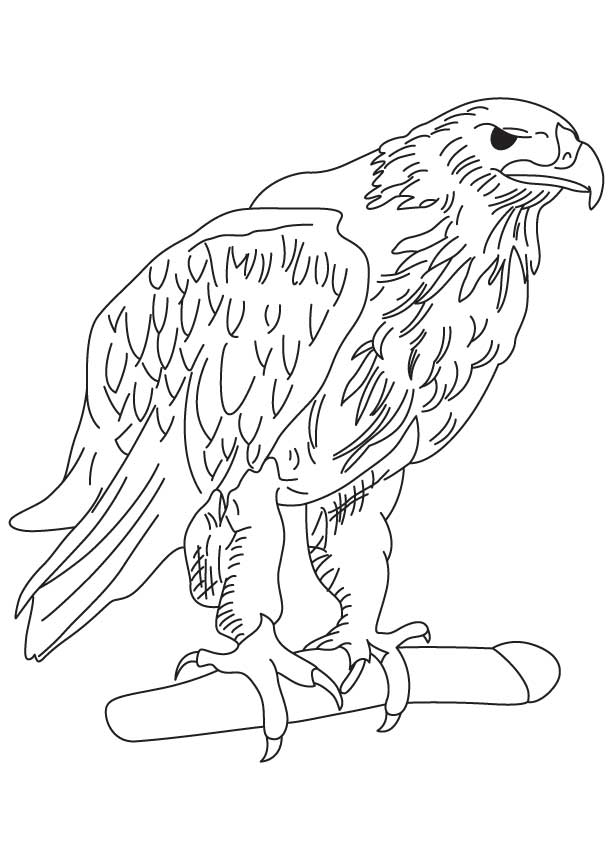 Golden eagle coloring page | Download Free Golden eagle coloring ...