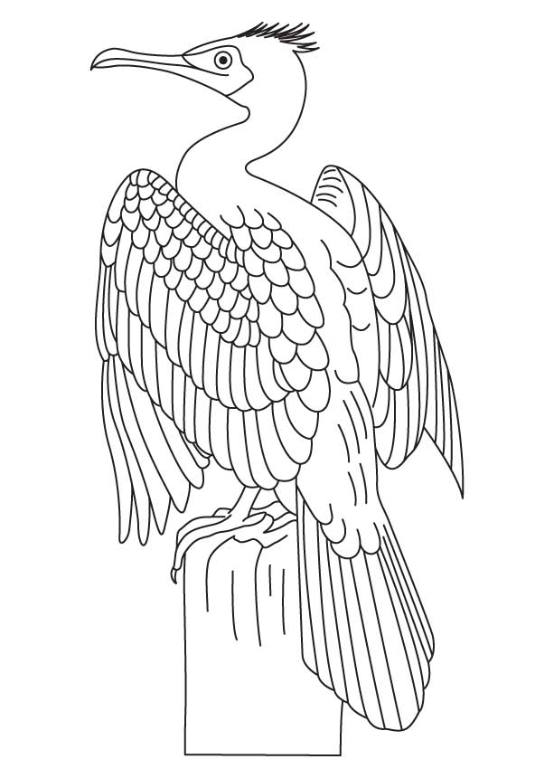 great cormorant coloring page