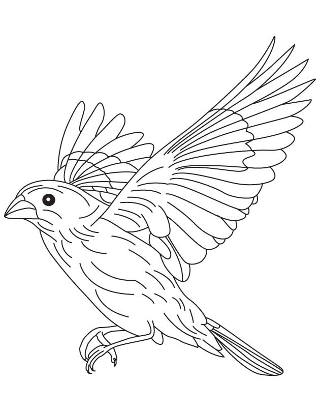 Grosbeak In Flight Coloring Page