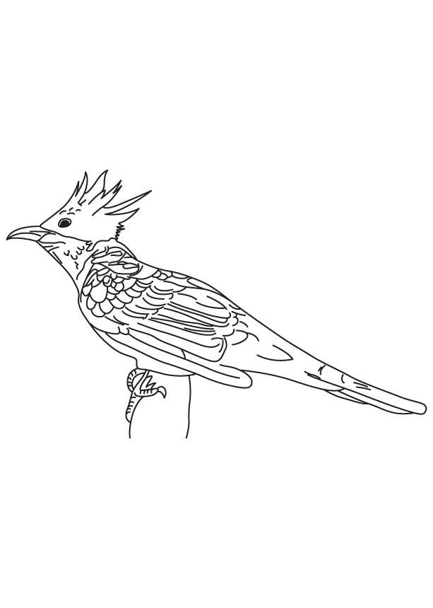 Guira Cuckoo Coloring Page