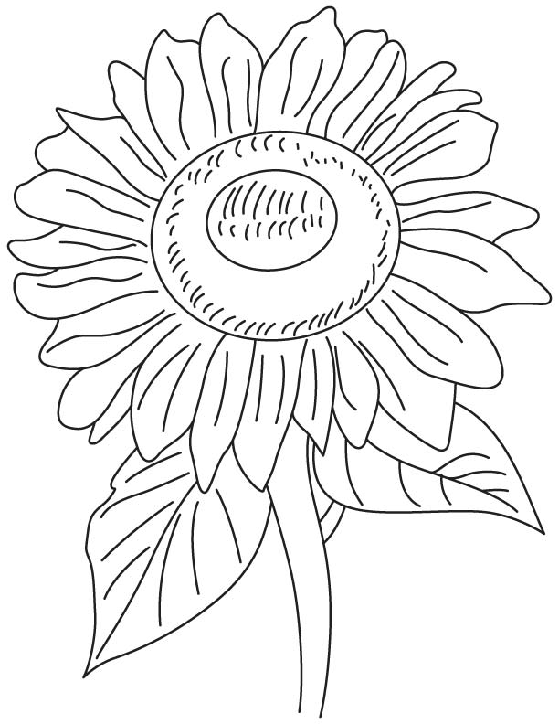 Helianthus flower coloring page