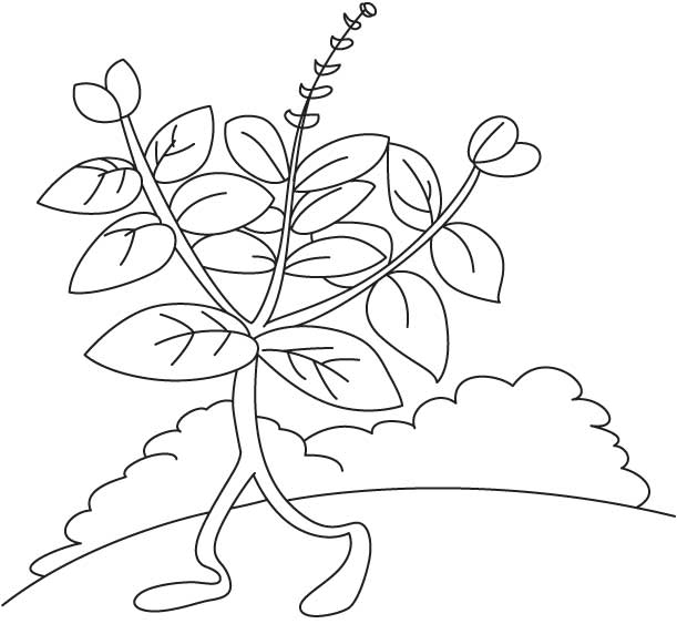 Holy basil walking coloring page