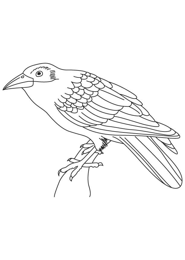Indian Crow Coloring Page