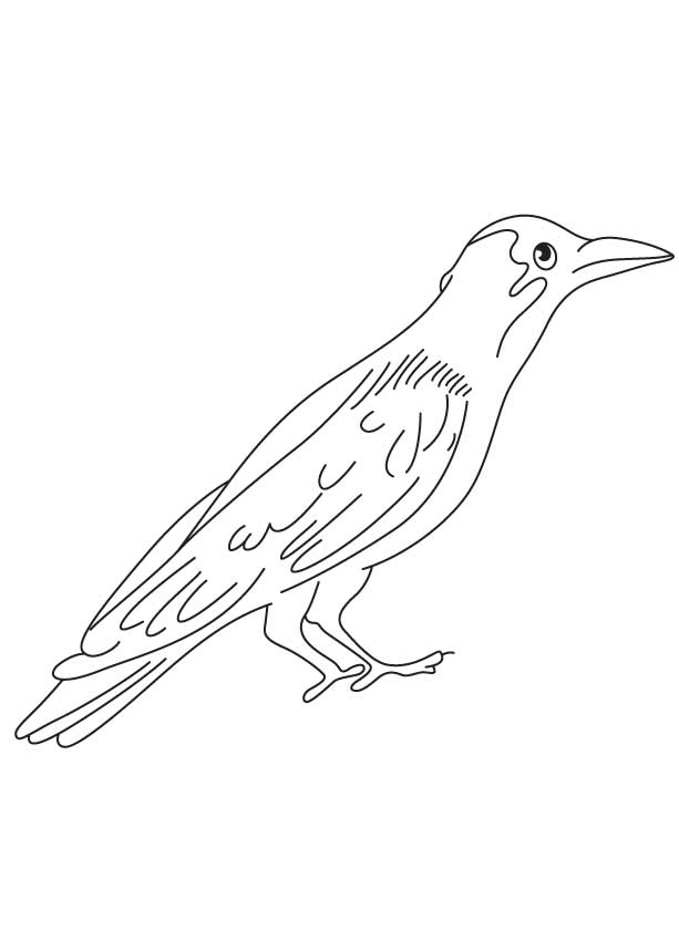 Intelligent crow coloring page