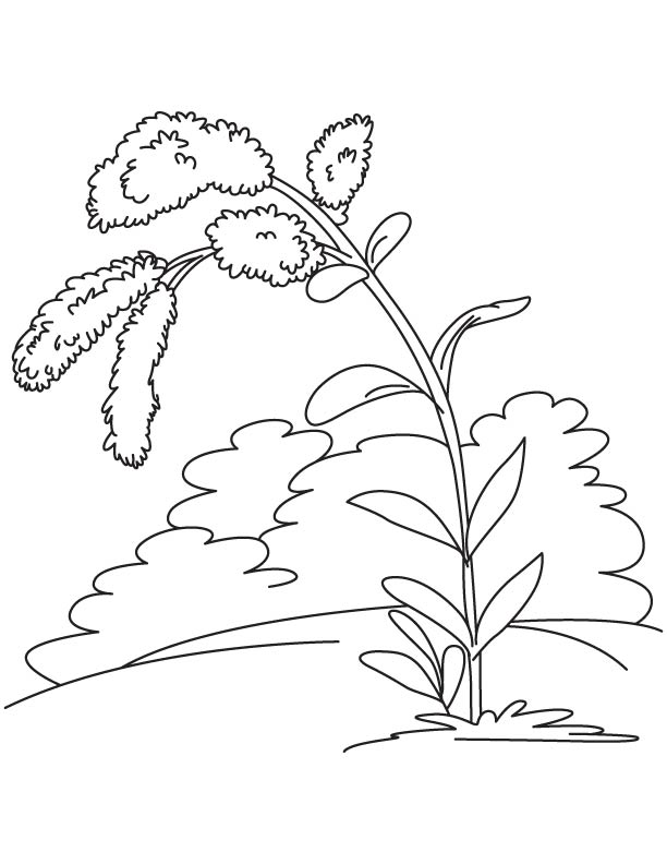 kentucky state flower coloring page - goldenrod coloring page the image kid